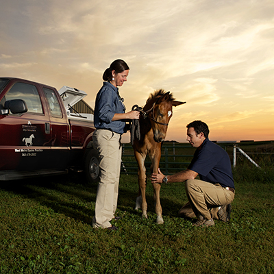 veterinary medicine professionals with horse